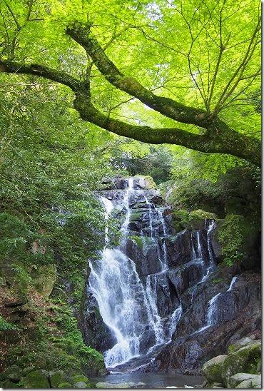 白糸の滝の新緑