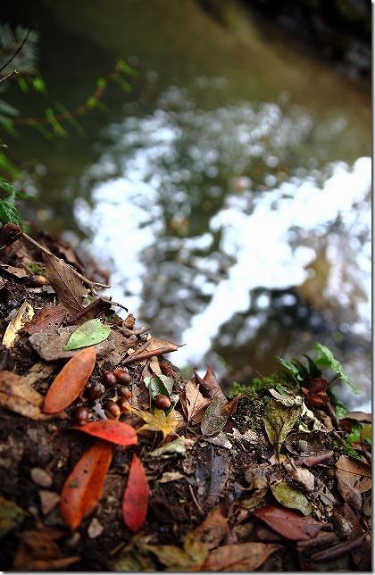 秋の野河内渓谷の渓流