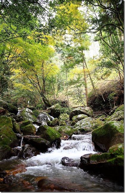秋の野河内渓谷の紅葉
