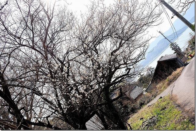 小富士梅林と糸島の海