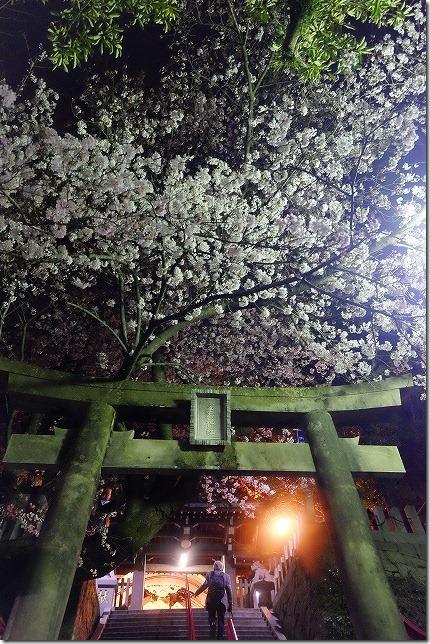 愛宕神社の夜桜 ライトアップ