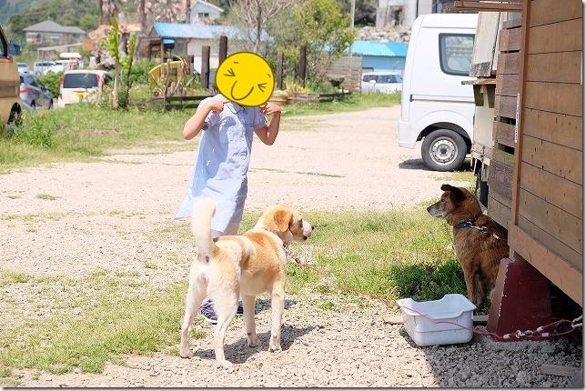 糸島HINODEの犬