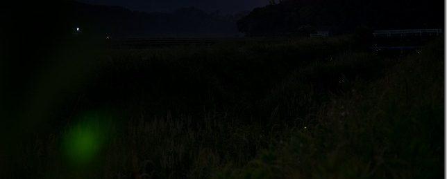 糸島のホタル