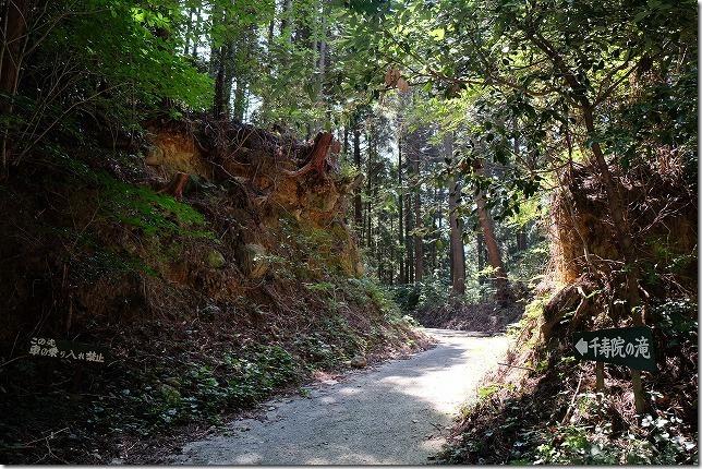 糸島、千寿院の滝への山道
