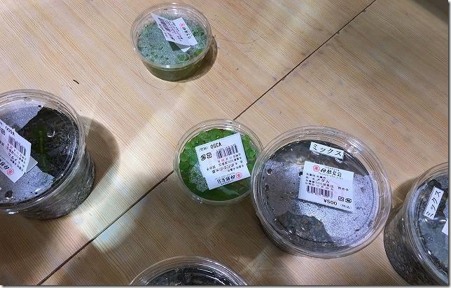 伊都菜彩の水草