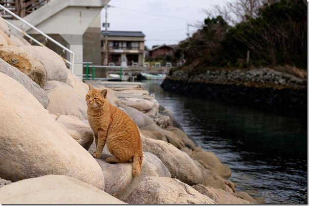 糸島芥屋、磯の家から芥屋漁港の猫