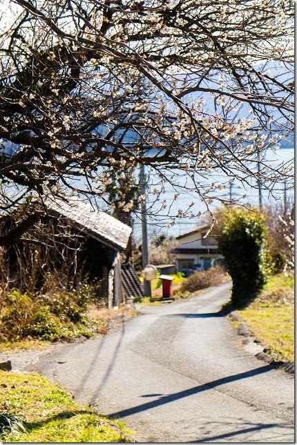 糸島 小富士梅林を散策
