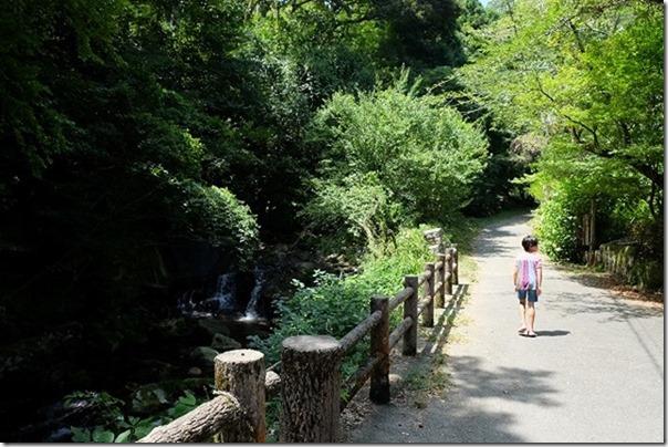 夏の野河内渓谷