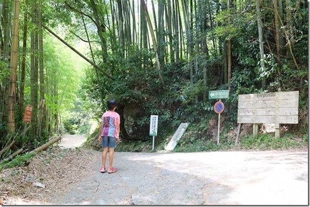 野河内渓谷の林道
