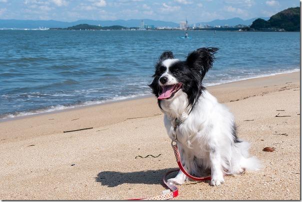 犬と今宿海岸(長垂海浜公園)から福岡タワー