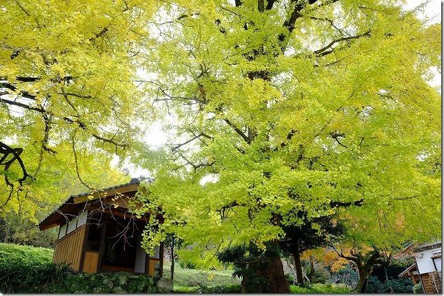 糸島、長石のお薬師様の大イチョウの祠
