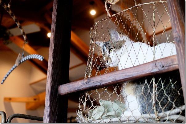 糸島,カフェ,ハナビ(hanabi)の猫ちゃん