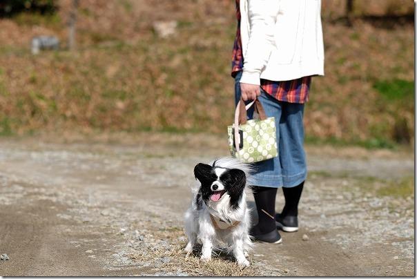 糸島をツクシを探しつつ犬の散歩