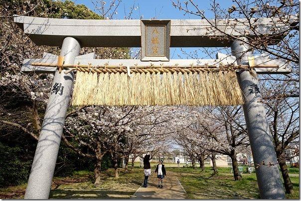 福岡市西区橋本の橋本八幡宮の桜