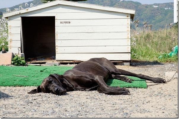糸島TIMEの犬
