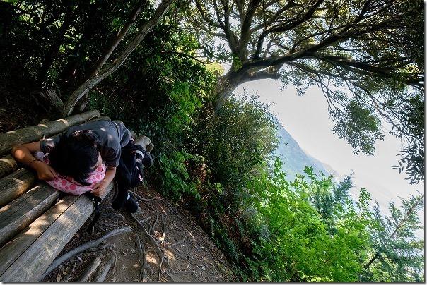 飯盛山山頂から叶岳の途中の杉林