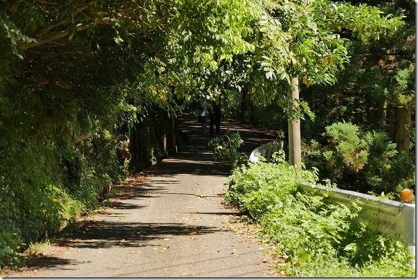 坊主ヶ滝への道