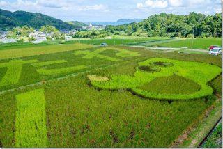 糸島 二丈の赤米(駐車場・アート)