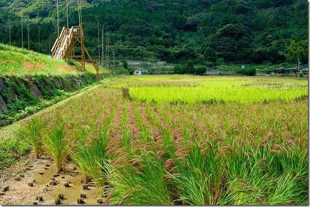 糸島二丈の赤米の展望台