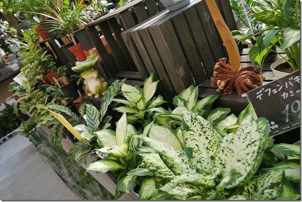 福岡市西区の西の丘にあるガーデニングショップ「エフェクト」観葉植物