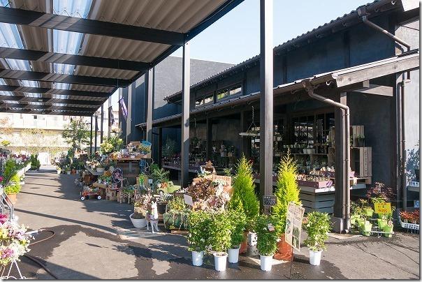 福岡市西区の西の丘にあるガーデニングショップ「エフェクト」切り花