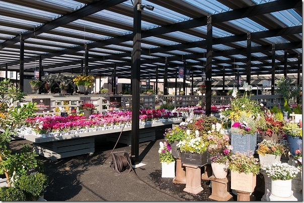福岡市西区の西の丘にあるガーデニングショップ「エフェクト」お花の品揃え