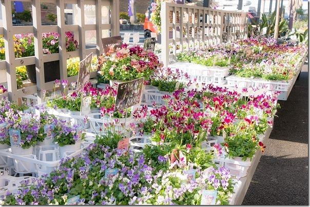 福岡市西区の西の丘にあるガーデニングショップ「エフェクト」たくさんの花