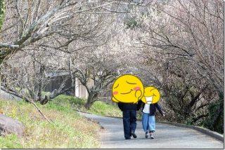 糸島の小富士梅林で梅干しやジャムを購入