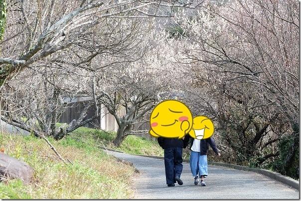 糸島,小富士梅林へ再び