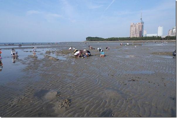 室見川の河口で潮干狩り大潮の干潮
