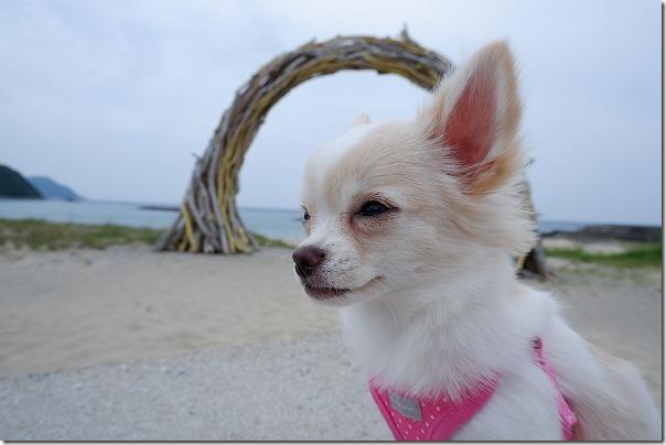 糸島、ジハングンの流木の輪っか