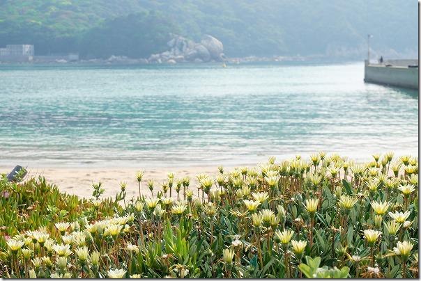 糸島,芥屋の青い海と花