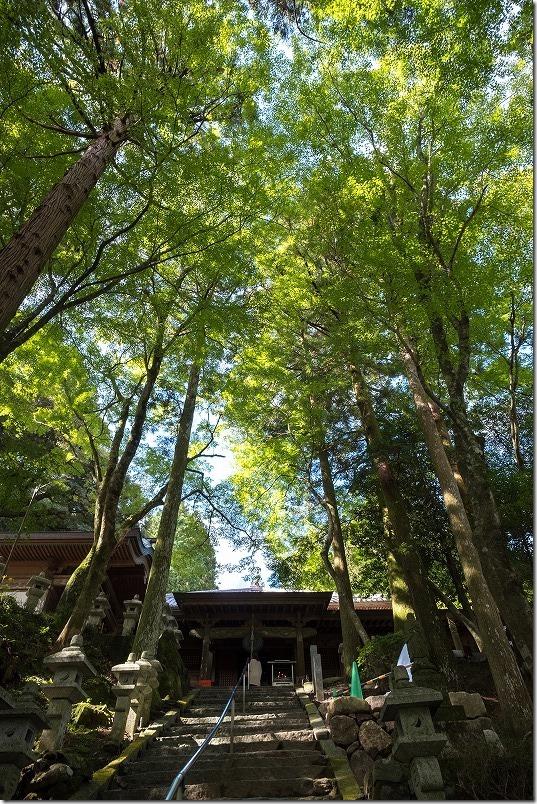 雷山千如寺大悲王院のきれいな木々