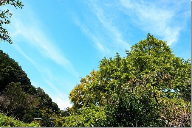 糸島,長石のお薬師様の大イチョウと青空