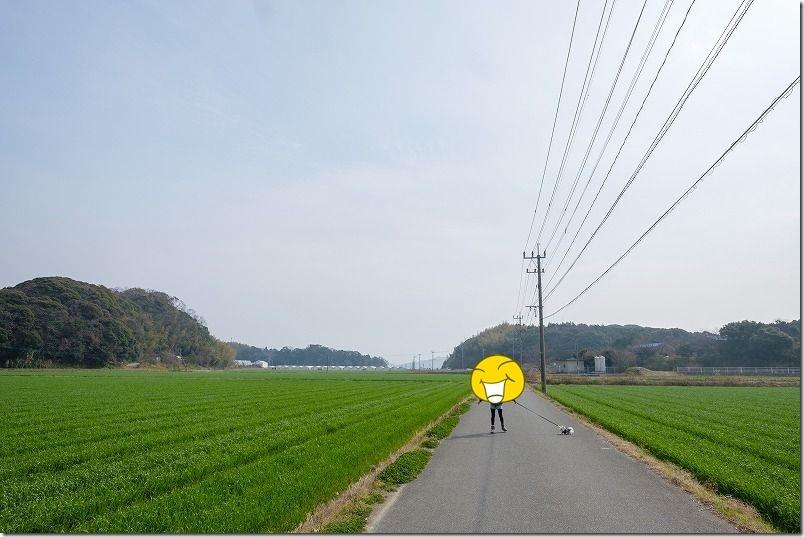 糸島でツクシを取った場所