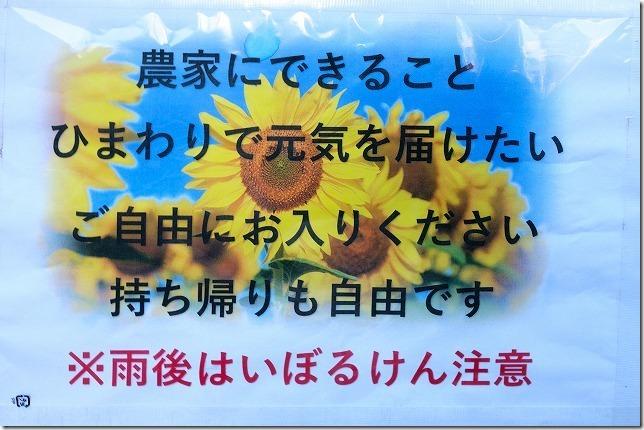 ひまわりの持ち帰りや入園について、糸島