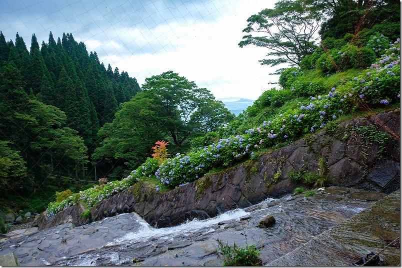 白糸の滝の紫陽花