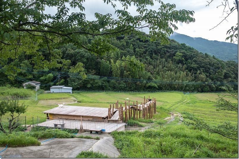 糸島「やぎ牧場」