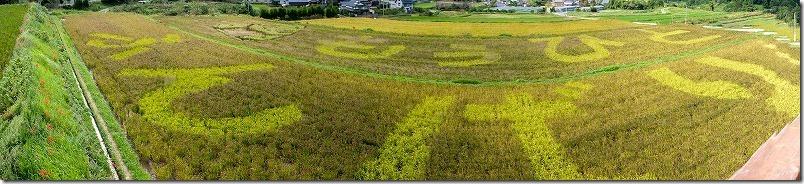 糸島二丈の赤米、今年の言葉は?
