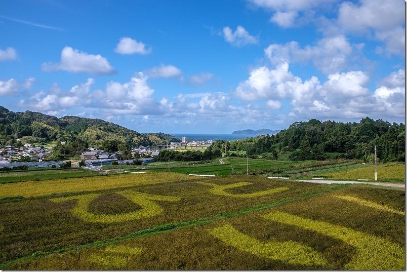 糸島二丈の赤米アート