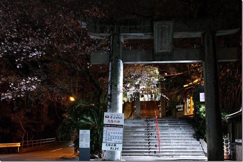 愛宕神社の夜桜2021