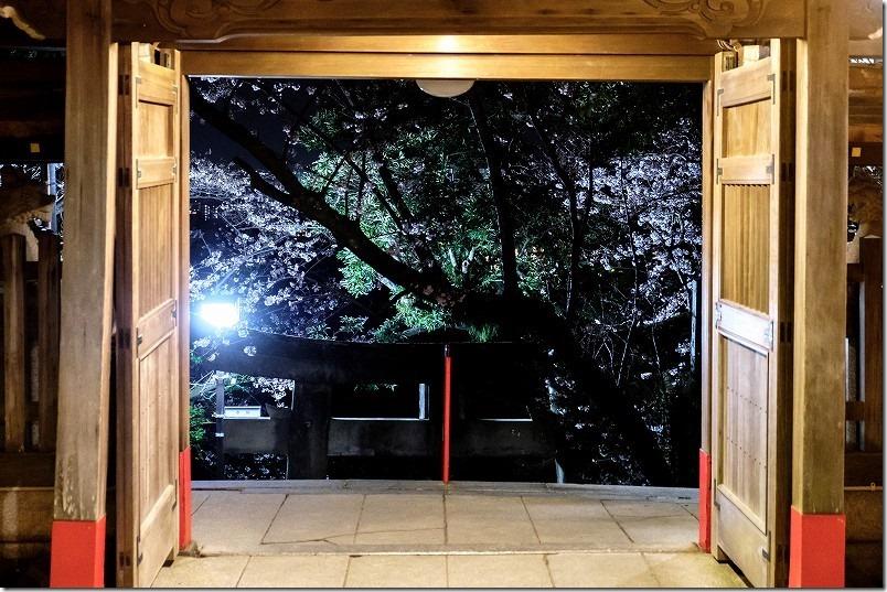 愛宕神社の夜桜と門