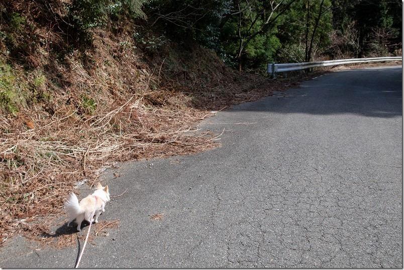 雷山神社から清賀の滝までの林道
