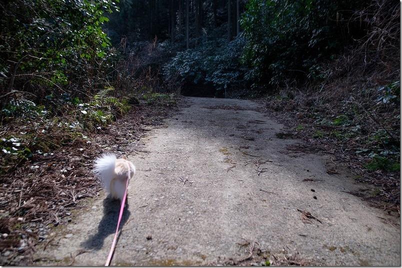 清賀の滝のすぐ手前の道