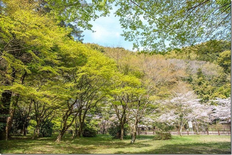 曲渕ダム公園の桜と紅葉