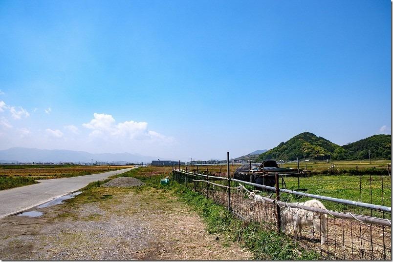 糸島こころ旅、火野さんが立ち寄ったヤギさん達
