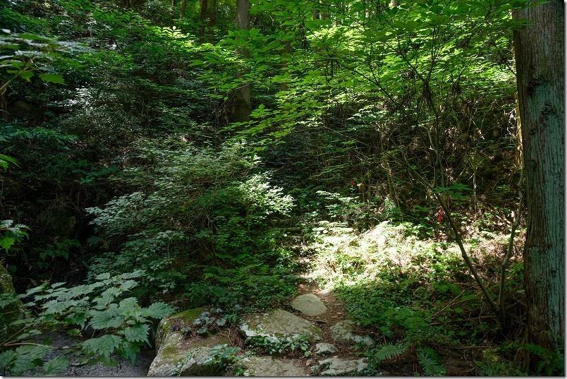 糸島・千寿院の滝の駐車場から滝壺までの道、山道