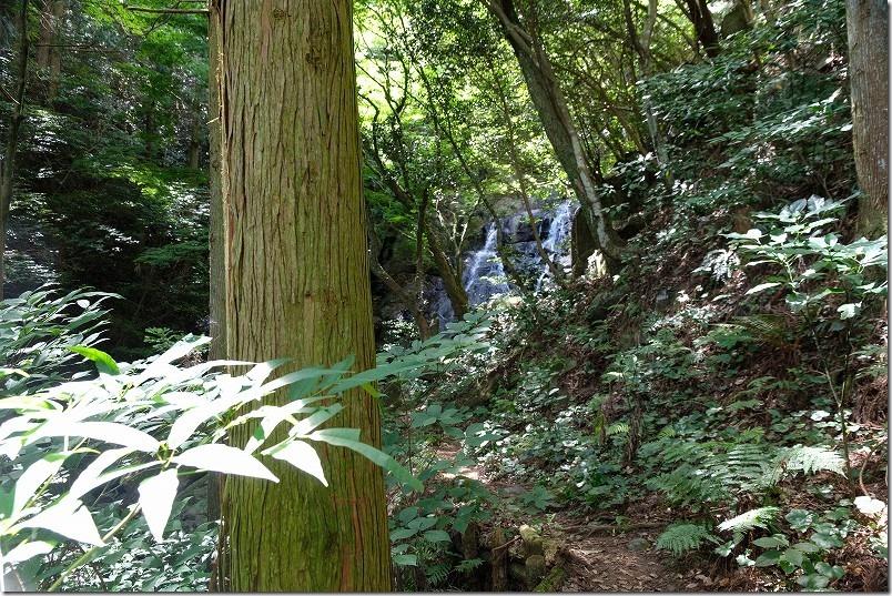 糸島・千寿院の滝の駐車場から滝壺までの道、滝が見えた