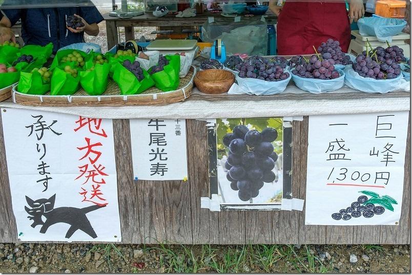 金武「ぶどう園」の価格・品種