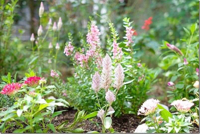 エフェクトで買った草花、ピンク系。夏・秋